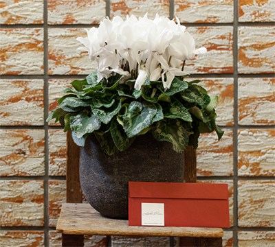 花鉢+レター