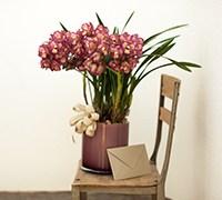 蘭の花鉢+レター