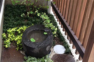レコールブランの観葉植物 お庭の植栽