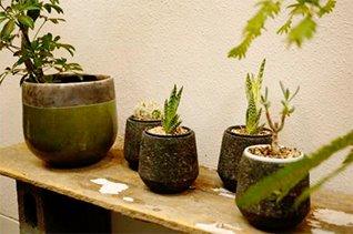 レコールブランの観葉植物 インドアグリーン